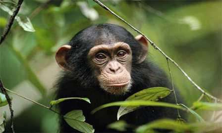 طالع بینی متولدین سال میمون