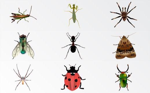 اگر حشرات از روی زمین بروند چه اتفاقی می افتد؟