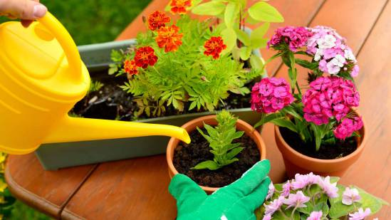 راه و رسم نگهداری از گل ها در خانه